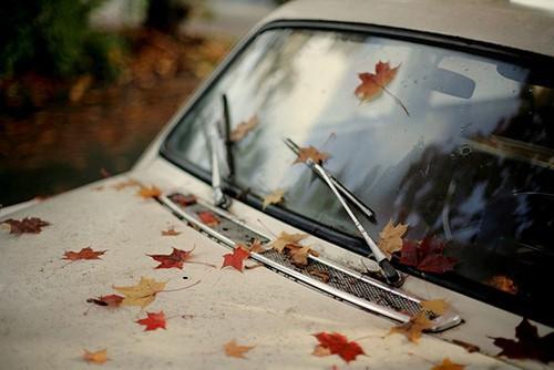 Car Fall Window